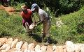 Sud 'Est : Vers une relance progressive des activités agricole à Platon Cèdre