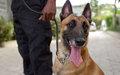 Brigade canine: 6 chiens policiers pour appuyer la PNH dans la lutte contre le trafic d'armes et de drogue